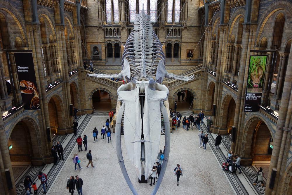 Londýn - přírodopisné muzeum